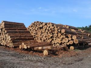 製材される町有林材